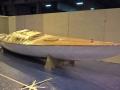 Requin Roger fin novembre 2 - 14