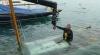 Danièla sortie de l'eau 31-5-14 (7)